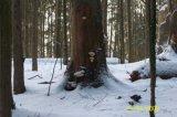 image 20091104_1752910427_2009_0411_winterwunderwald-jpg